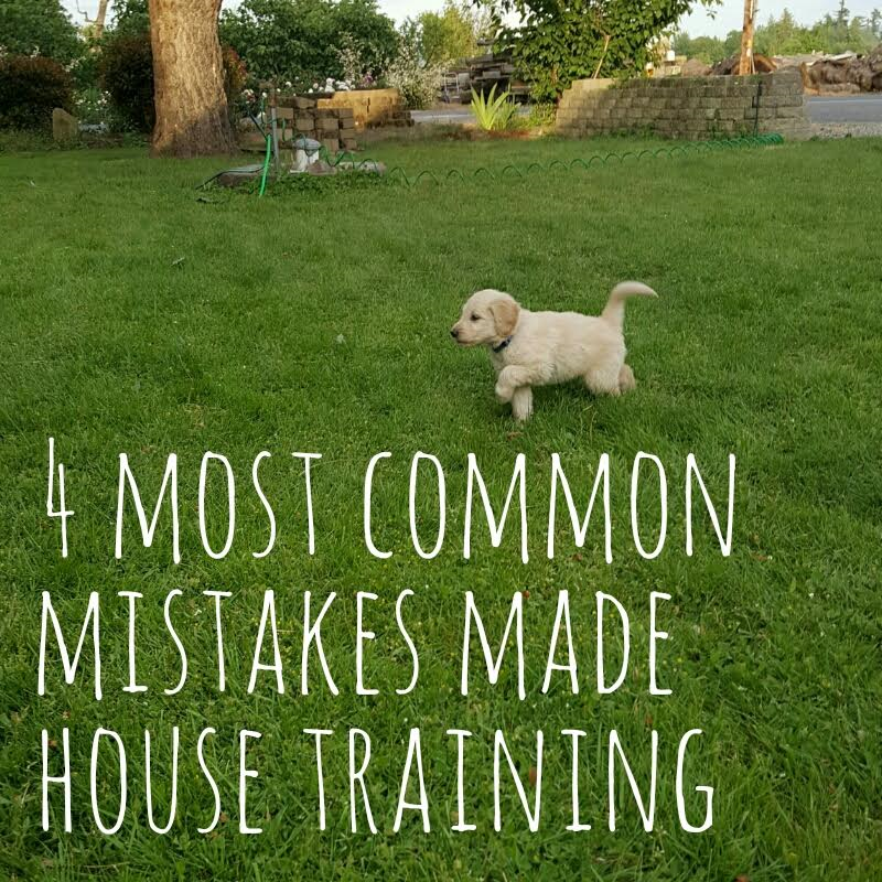 The Worst Mistake People Make When Placing Under Counter: The Biggest Mistakes People Make When House Training