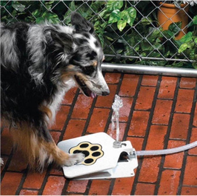 dogfountain