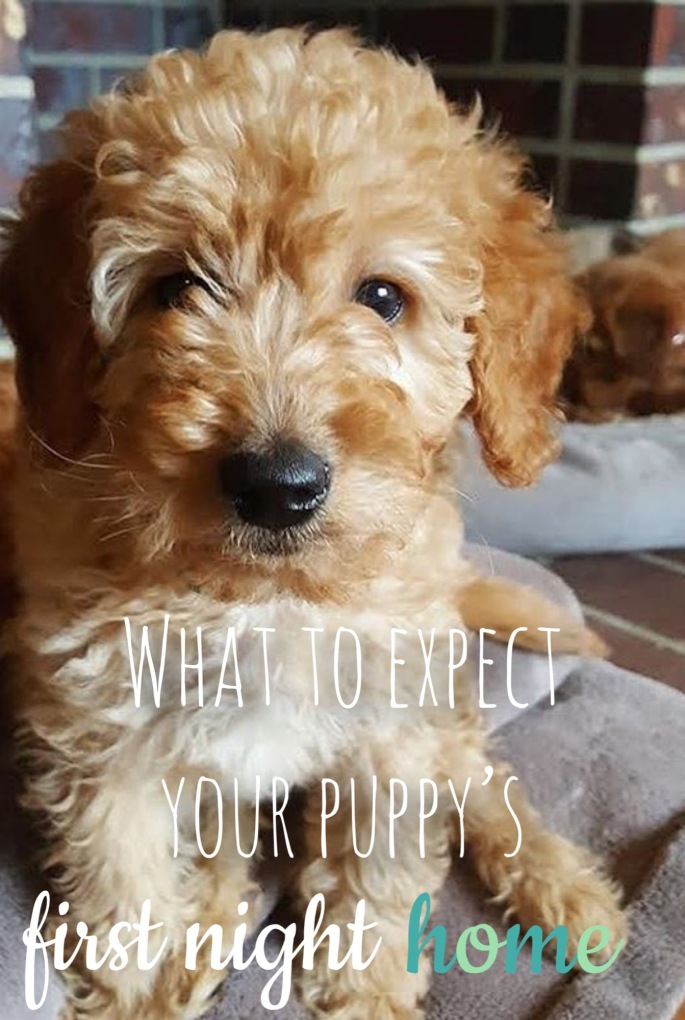 how to get ready for your new puppy