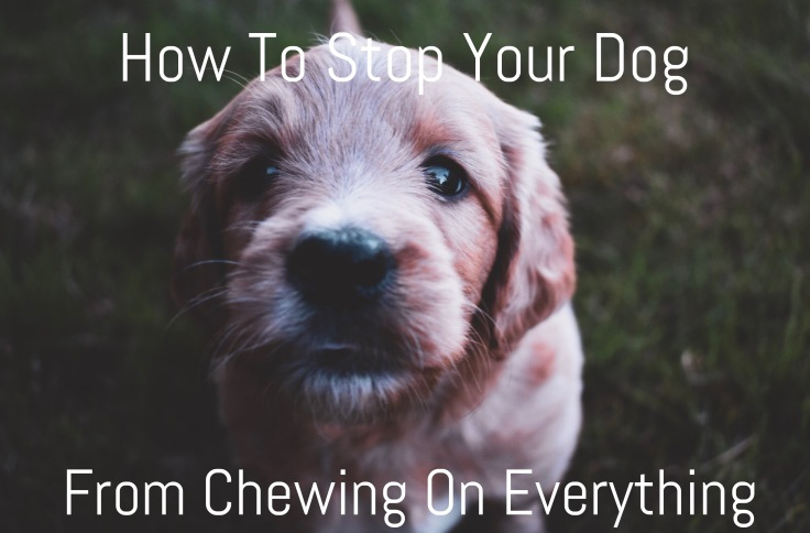 howtostopyourdogfromchewing
